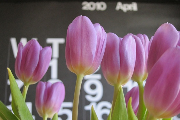 Purple Tulips with a Stendig Calendar in the background showing April 2010