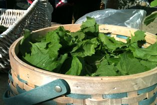 garlic mustard greens