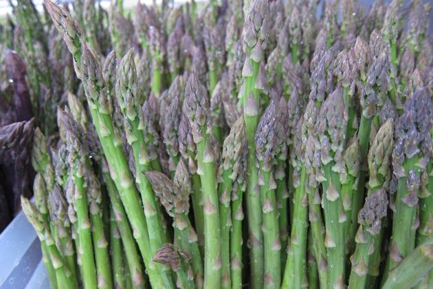 asparagus in spring