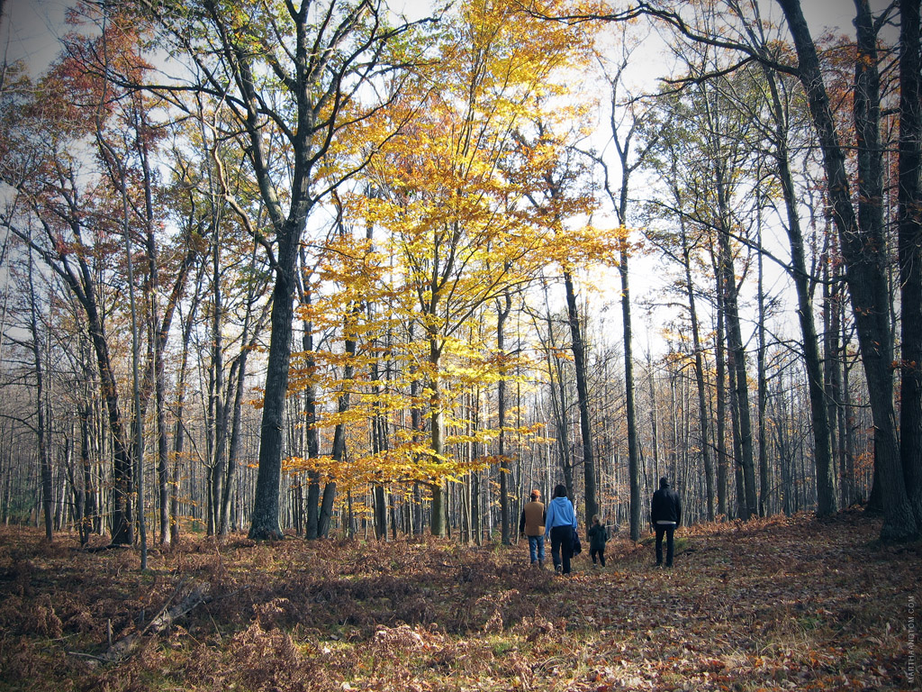 walking through the woods under a golden tree in fall