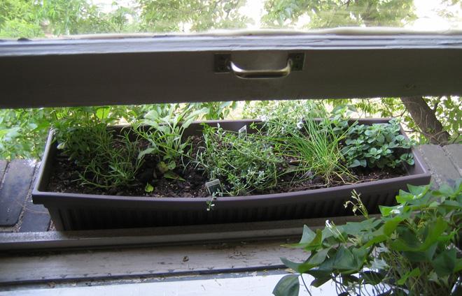Herb Garden - June 1