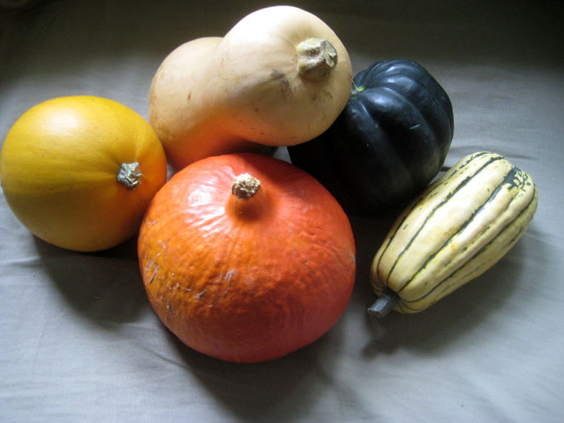 Five squashes, five days: who will survive?
