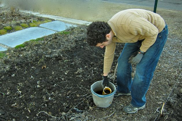 Danny Schwartzman leans to fill his cup and spread fertilizer over the plant beds.