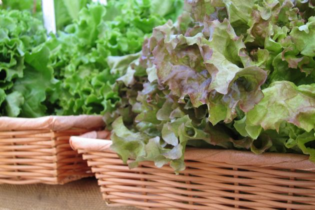 Baskets of lettuces from Gardens of Eagan