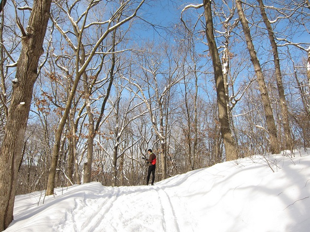 a cross country skier against a blue sky in a wooded area