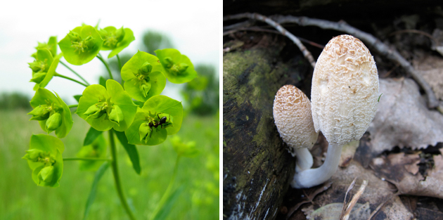 green flowers with an ant on them and a second photo of a brownish white mushroom in the woods