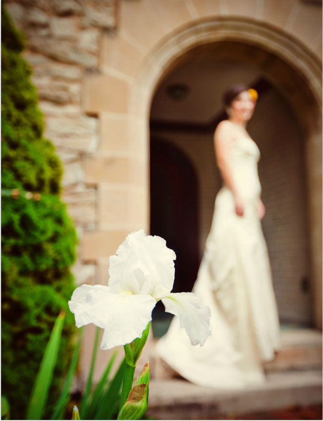 white iris blooming