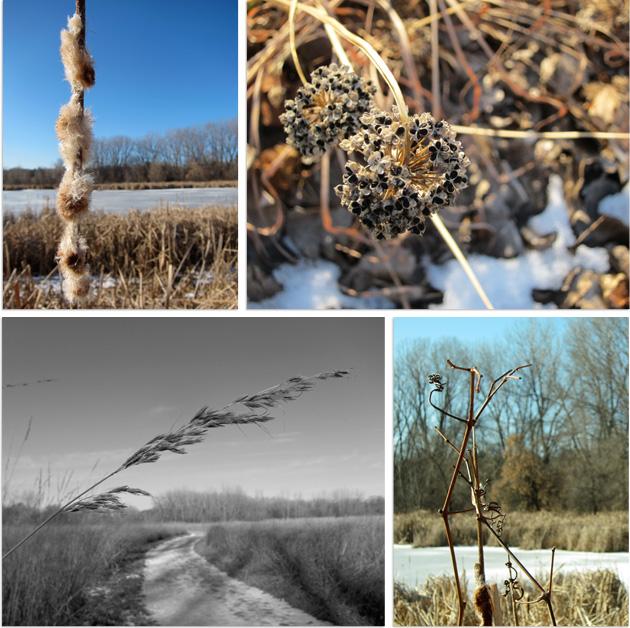 winter walk details