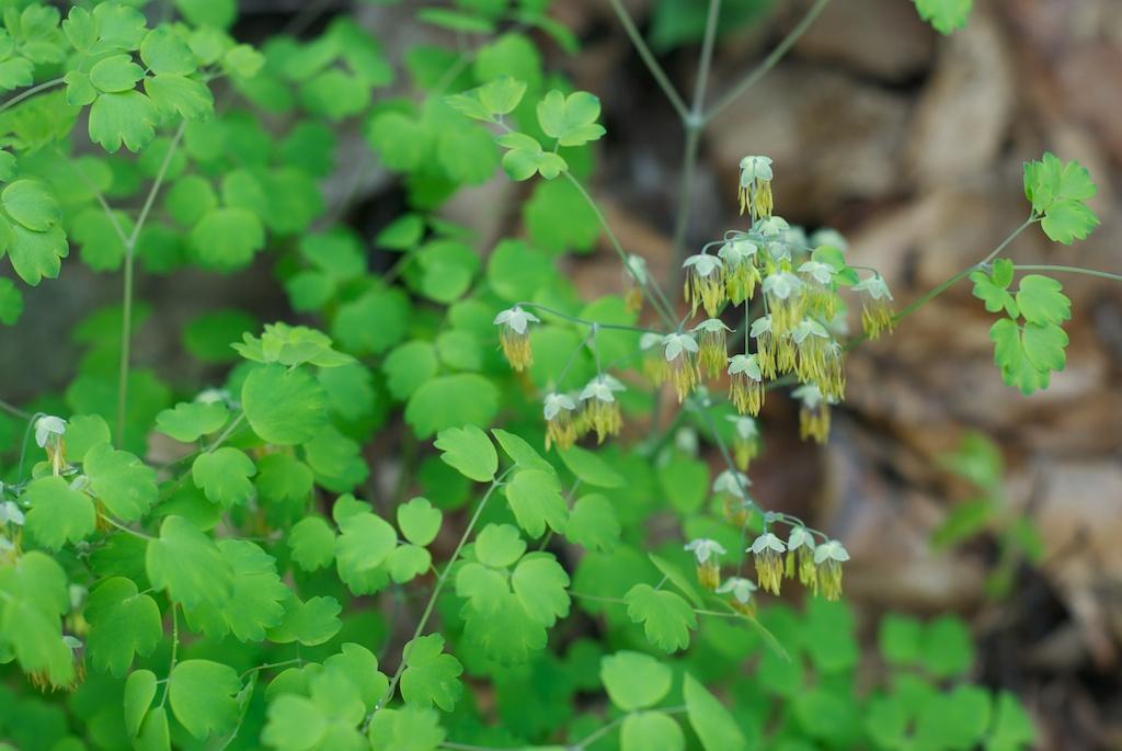 Minnesota wildflowers in spring